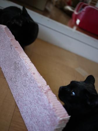 立ってるピンクのつめとぎ猫 空しぇるのぇるろった編。_a0143140_21485946.jpg