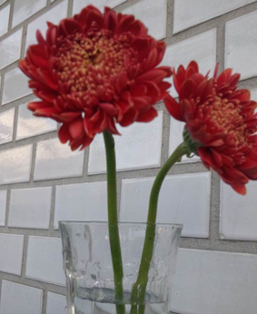 花のある生活_c0046441_211477.jpg