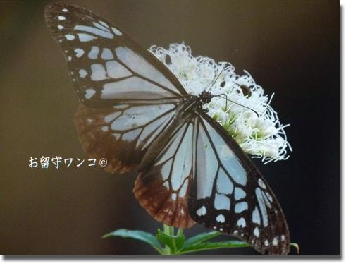 f0111147_23554910.jpg