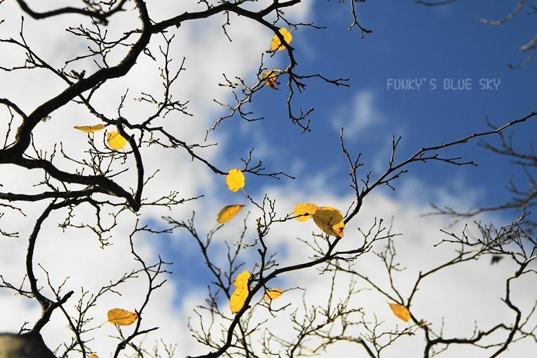 変わりやすい秋空の下で・・ ♪_c0145250_19554444.jpg