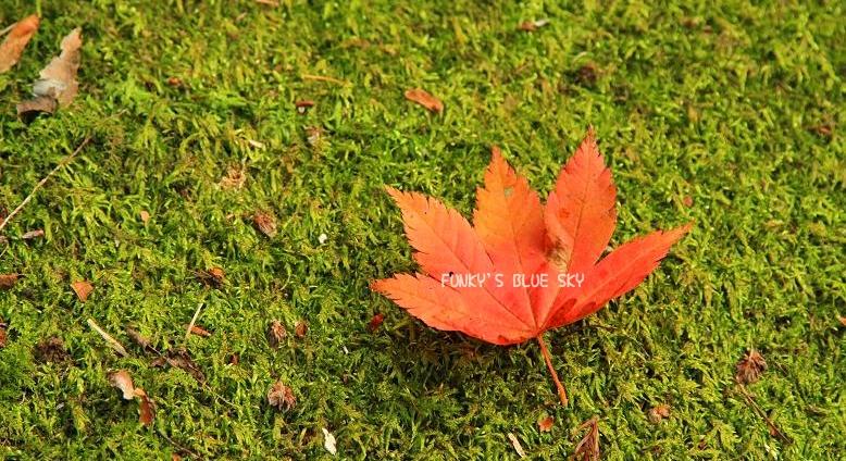 変わりやすい秋空の下で・・ ♪_c0145250_201622.jpg