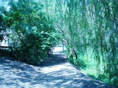 お散歩写真と「囲む会」_f0234165_9351573.jpg
