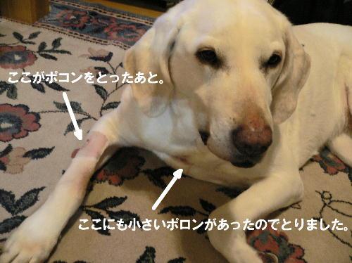 b0169987_2016276.jpg