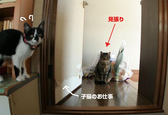 子猫部屋開放_d0071596_22274049.jpg