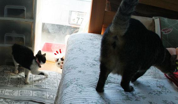 子猫部屋開放_d0071596_22284472.jpg
