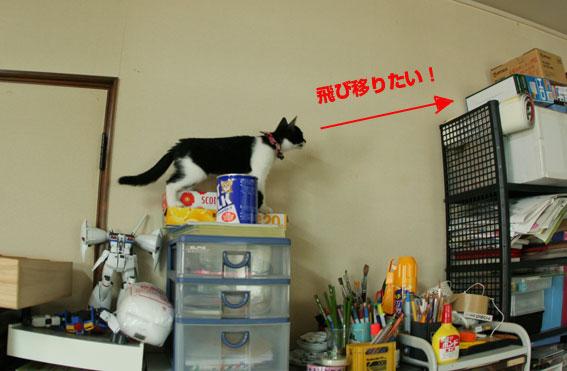子猫部屋開放_d0071596_22301254.jpg