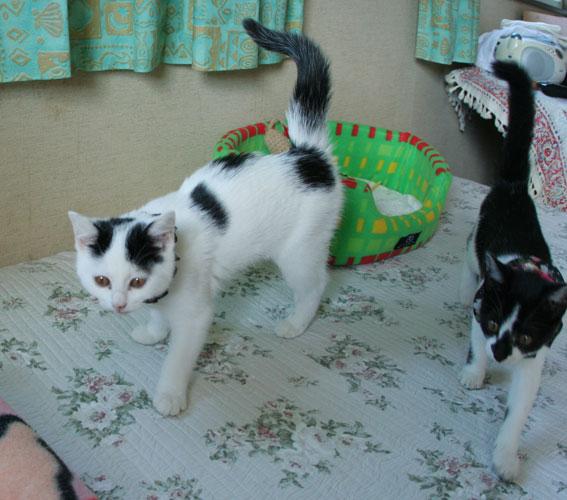 子猫部屋開放_d0071596_22305680.jpg