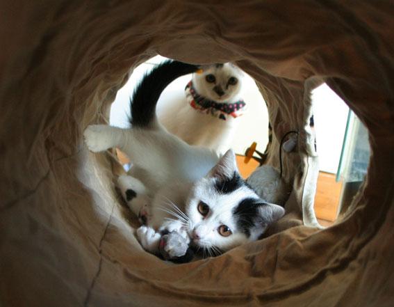 子猫部屋開放_d0071596_22312475.jpg