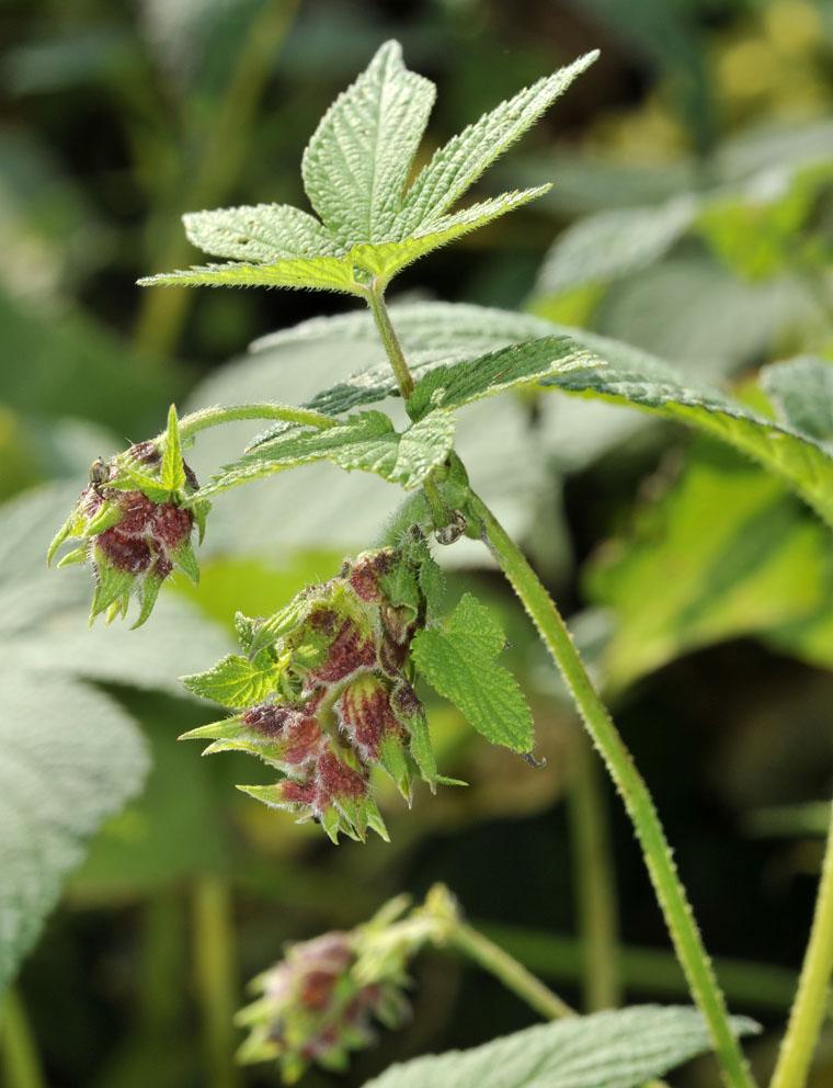 つる植物の話-6_d0163696_23152399.jpg
