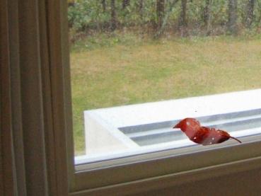 窓/少年 (7枚)_a0152009_208136.jpg