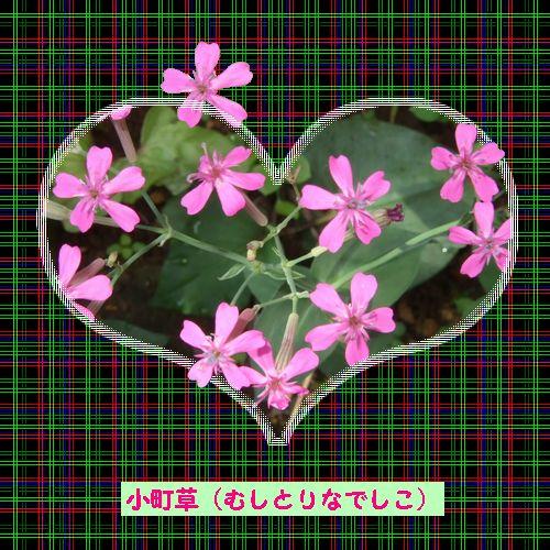 d0048312_20114375.jpg