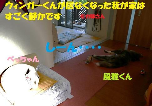 f0121712_14324742.jpg