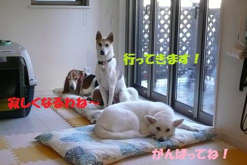 f0121712_1605086.jpg