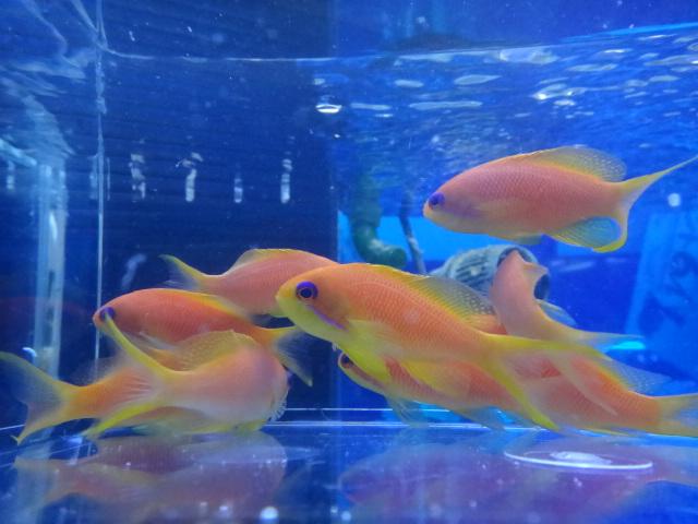 海水魚・サンゴ_f0189122_13341285.jpg