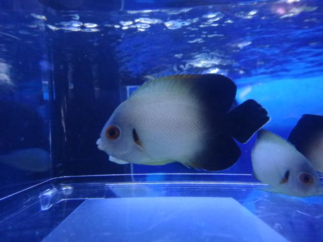 海水魚・サンゴ_f0189122_1337468.jpg