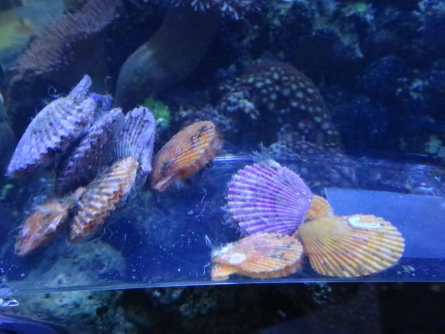 海水魚・サンゴ_f0189122_13402729.jpg
