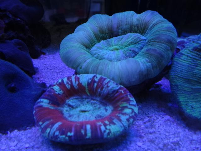 海水魚・サンゴ_f0189122_13414614.jpg