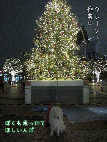 キラキラ準備中_c0062832_6535116.jpg