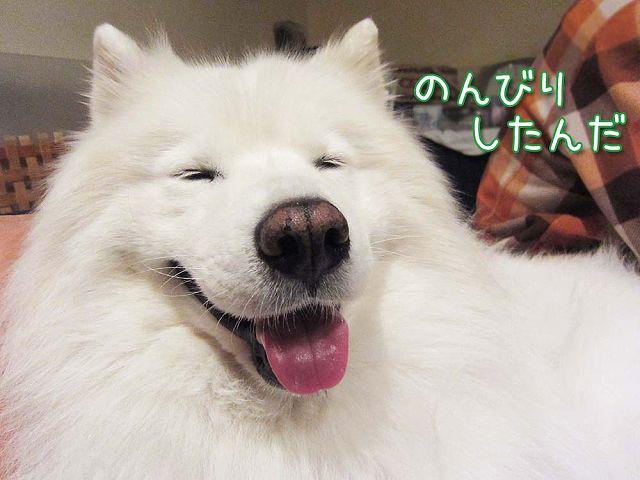 キラキラ準備中_c0062832_6535548.jpg