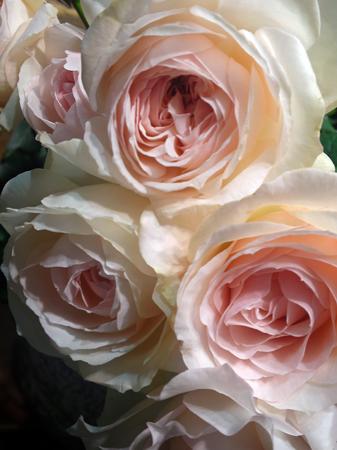 秋のバラ祭_e0243332_11135764.jpg