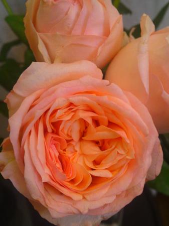 秋のバラ祭_e0243332_1114977.jpg