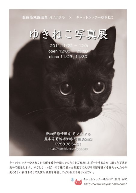 『ゆきねこ写真展』開催のお知らせ。_a0143140_2250156.jpg