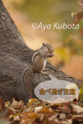 b0088971_0485157.jpg