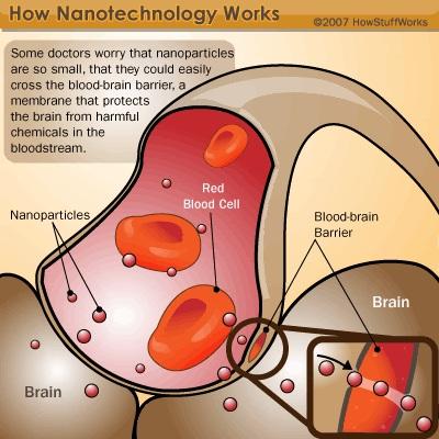 日焼け止めなどに含まれる酸化チタンナノ粒子 脳への毒素侵入を防ぐ関門を破壊 フランス原子力庁の実験_c0139575_19203771.jpg