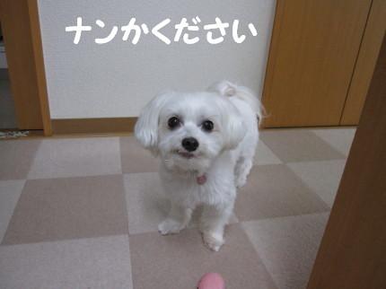 b0193480_16862.jpg