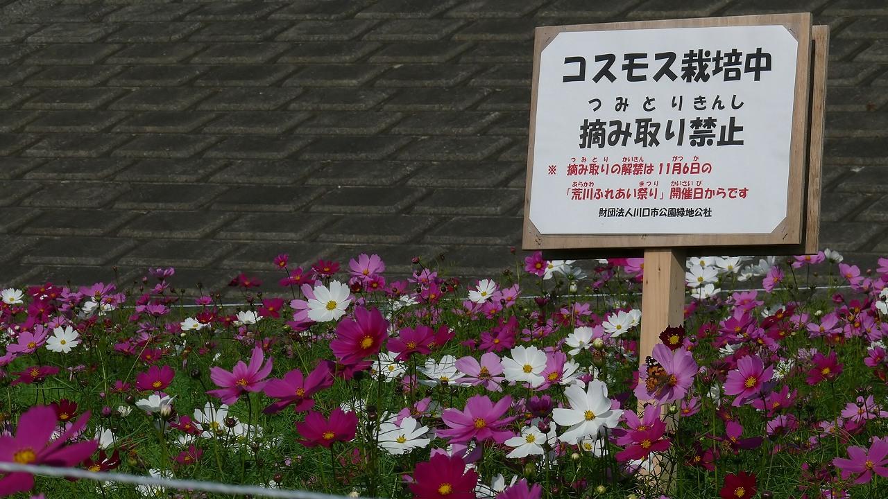 【 日記 11/1 】 コスチョウ不発!_a0185081_2041133.jpg