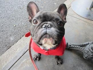 犬のキモチ♂_d0091909_10404146.jpg