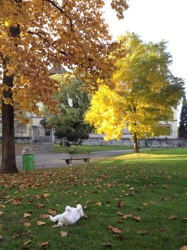 Autumnal_c0201334_2246537.jpg