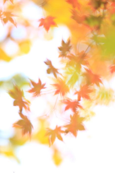 ■■ 秋 ふるる・・・ ■■_c0195662_2247921.jpg