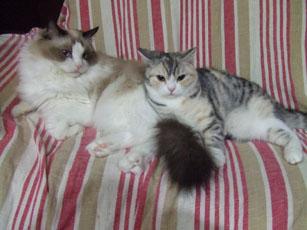 猫たちの関係_e0182479_20395513.jpg