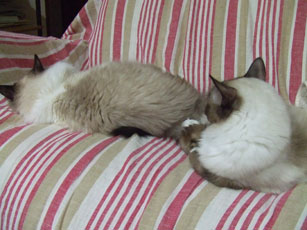 猫たちの関係_e0182479_20401113.jpg