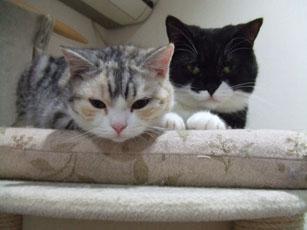 猫たちの関係_e0182479_20403466.jpg