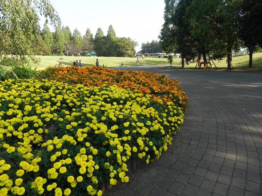 花の丘公園の花々_c0187781_17261849.jpg