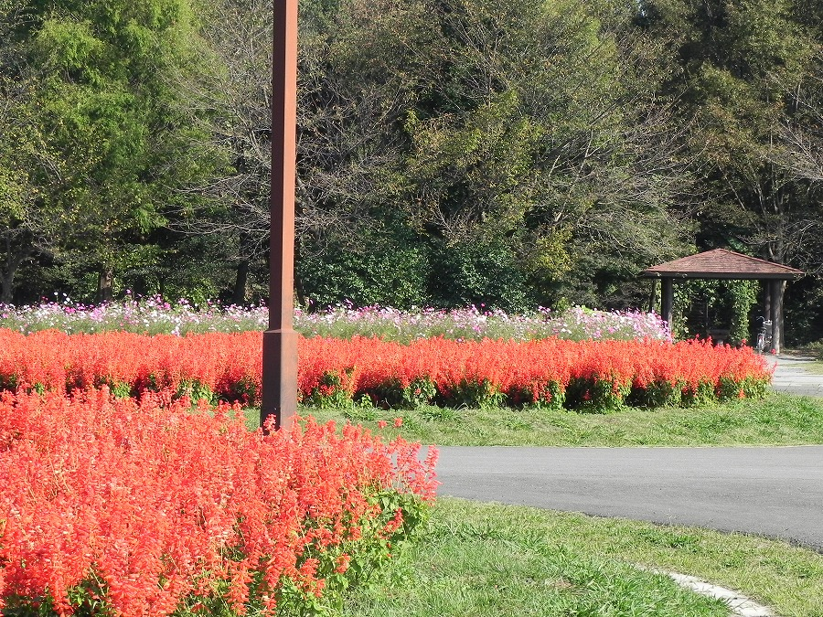 花の丘公園の花々_c0187781_17275475.jpg