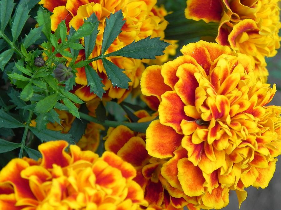 花の丘公園の花々_c0187781_17282175.jpg
