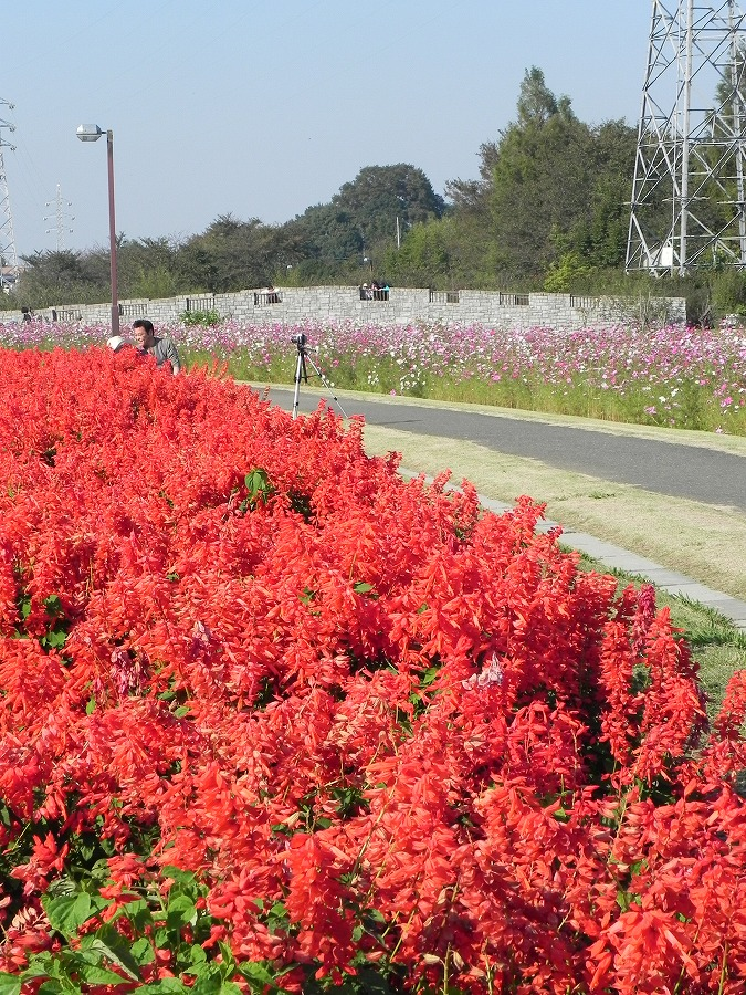 花の丘公園の花々_c0187781_172930100.jpg