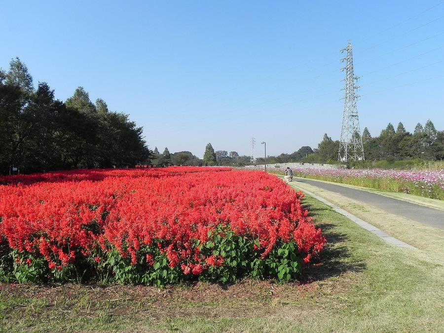 花の丘公園の花々_c0187781_1731443.jpg