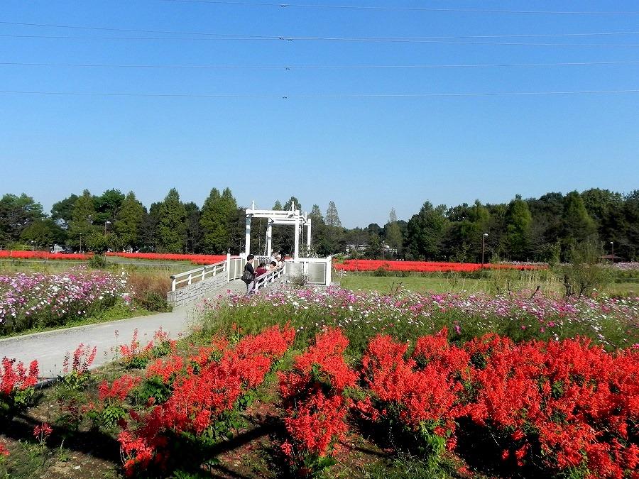 花の丘公園の花々_c0187781_17334222.jpg