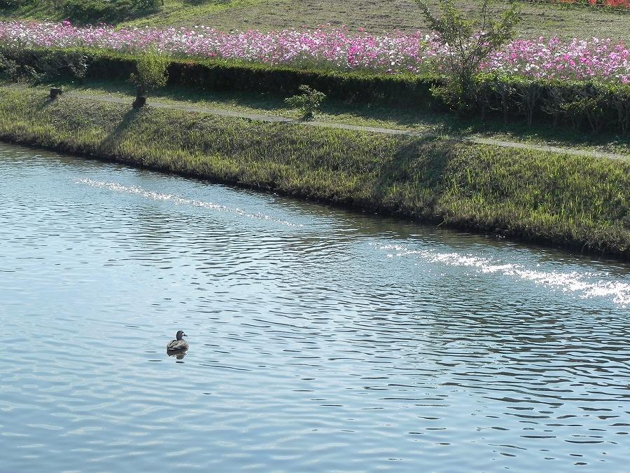 花の丘公園の花々_c0187781_1733479.jpg