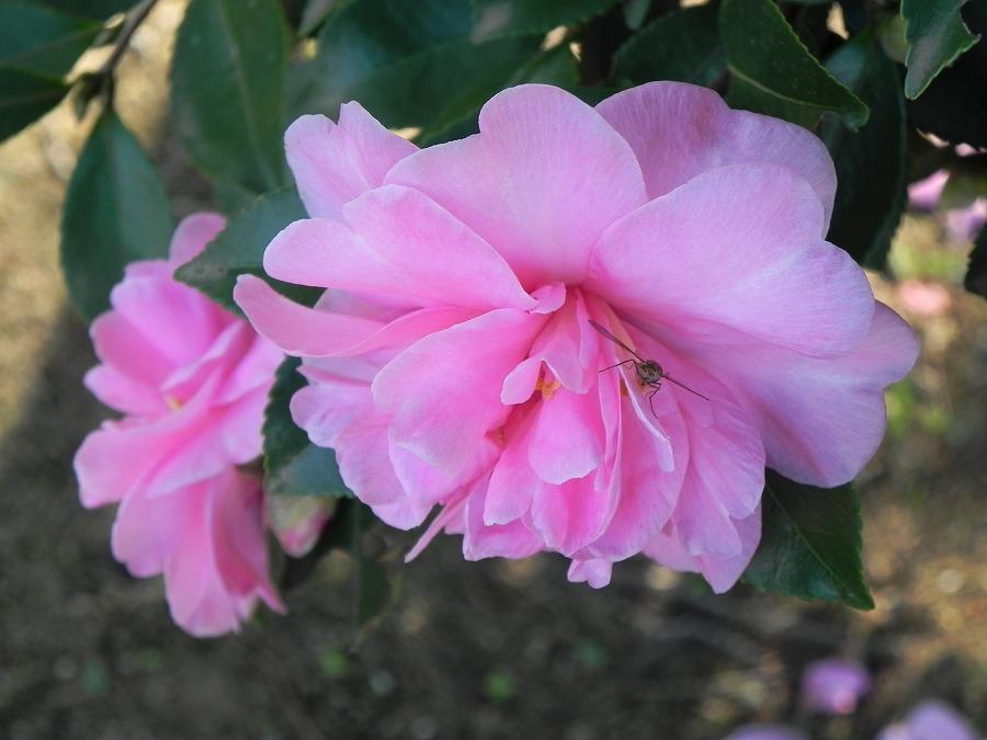 花の丘公園の花々_c0187781_17341164.jpg