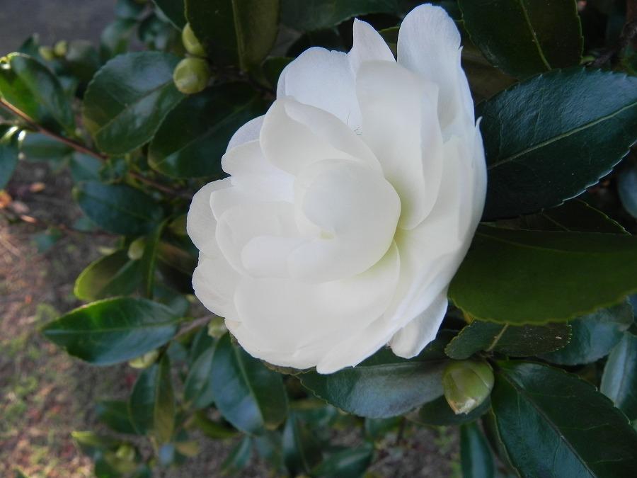 花の丘公園の花々_c0187781_17353560.jpg