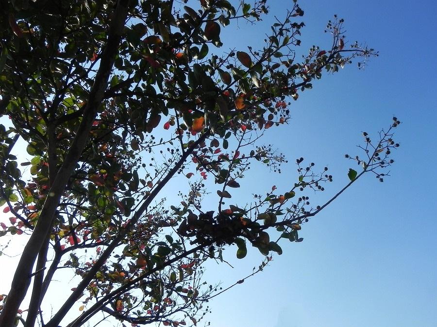 花の丘公園の花々_c0187781_17392172.jpg