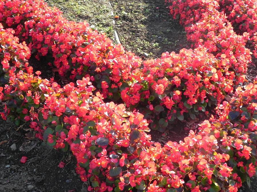 花の丘公園の花々_c0187781_17403780.jpg