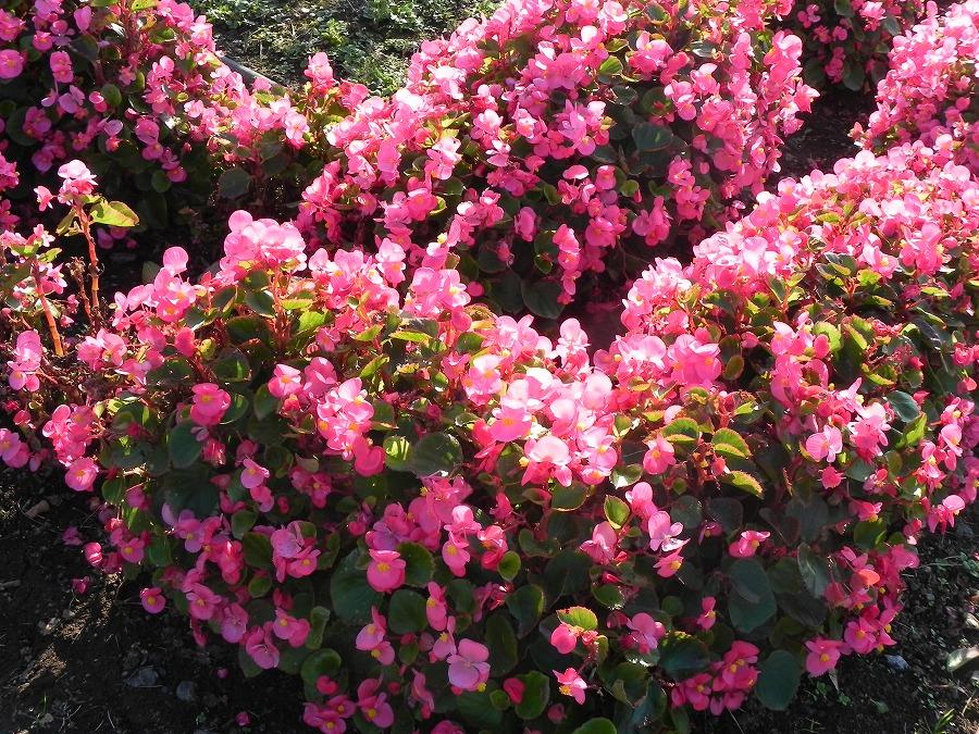 花の丘公園の花々_c0187781_17411034.jpg