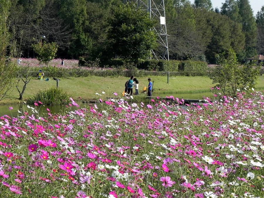 花の丘公園の花々_c0187781_174613100.jpg