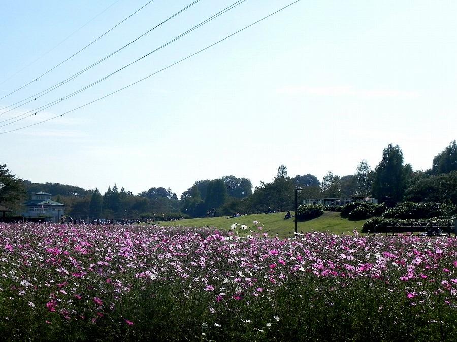 花の丘公園の花々_c0187781_17465431.jpg